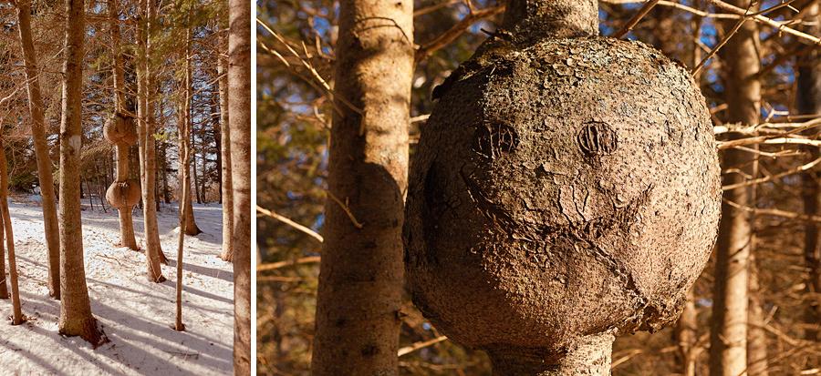 Happy Tree at Burncoat Head Park